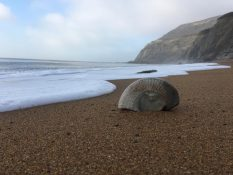FOSSIL HUNTING ALONG THE JURASSIC COAST